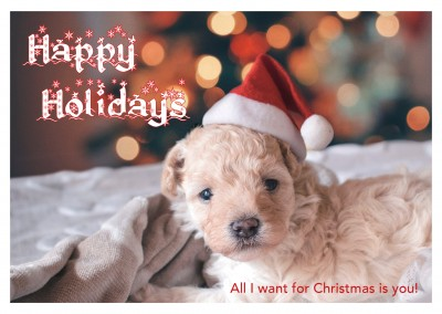 photo little dog puppy with santa claus hat