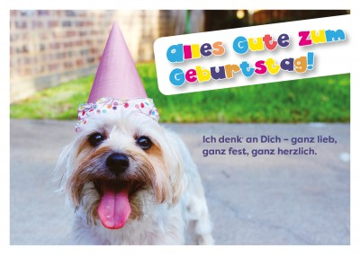 Foto Hund mit Party-Hut