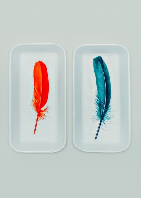 Kubistika red an blue feather