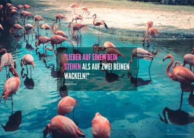 flamingo postkarte mit motivations-spruch