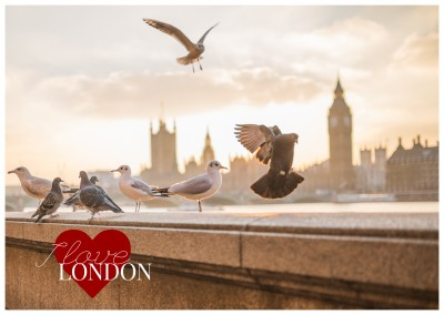 London Skyline with doves