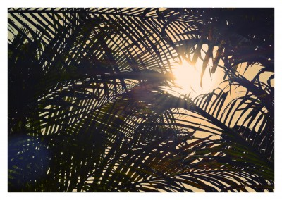 Looking through the thicket of palm trees