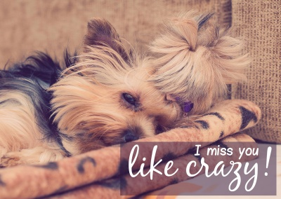 hund i miss you like crazy postkarte