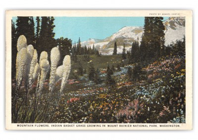 Mount Rainier National Park, Washington, Mountain Flowers