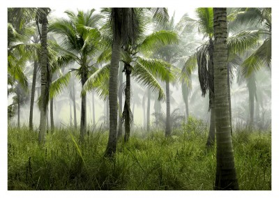 Palm Tree Forest