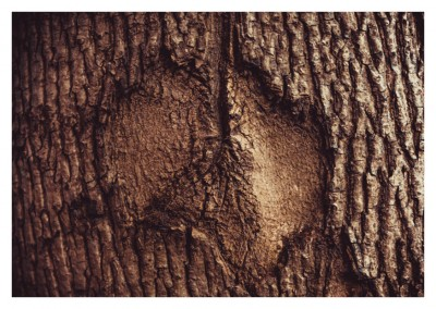 photo tree bark