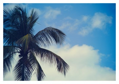 photo of palm tree's top