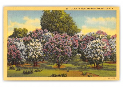 Rochester, New York, lilacs in Highland park