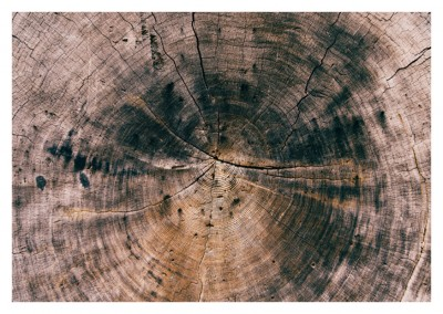 photo tree rings
