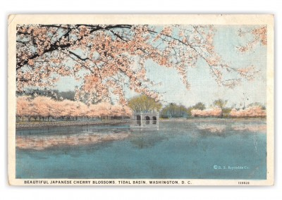 Washington DC, Cherry Blossoms, Tidal Basin